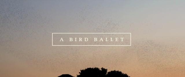 01_birdballet
